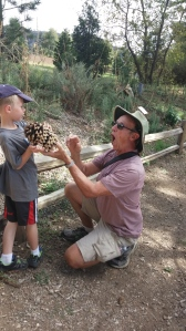 Grandpa Jim is demonstrating for Tigger why one should not pick up a pine cone from a Coulter pine tree.