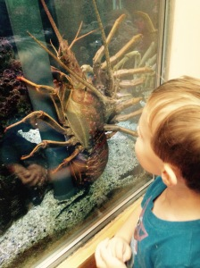 Tahoe was intrigued by the ocean creatures he saw this summer when his mom took him to a local aquarium.