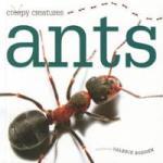ants-valerie-bodden-hardcover-cover-art